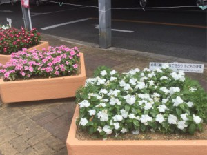 コノミヤ花壇