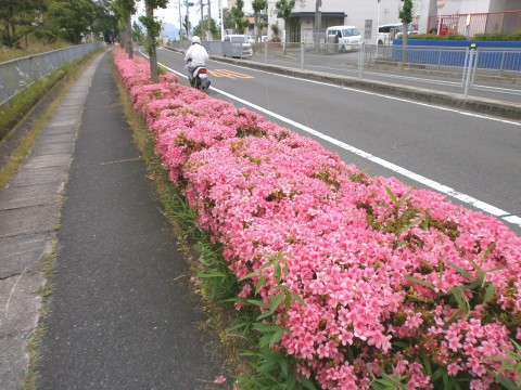 南花台に「サツキ」の花が満開ヽ( 。 )ノ   咲っく南花台.com 791c501a8e5